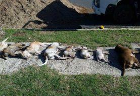 Envenenamiento masivo de perros y gatos Feria Ganadera