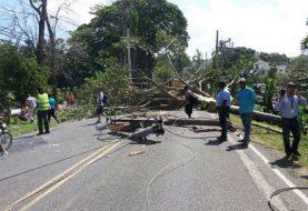 Árbol derriba línea 69 kilovatios en Puerto Plata