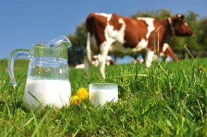 Ganaderos donarán 30 mil litros de leche