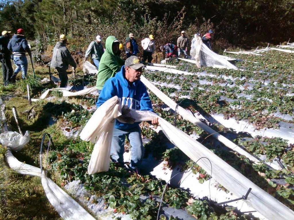 Medio Ambiente inicia desmonte de tuberías en Valle Nuevo