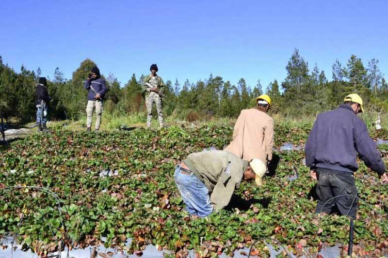 Medio Ambiente sigue retirando tuberías en Valle Nuevo
