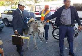 Incautan burros a campesinos iban con rumbo al Palacio Nacional