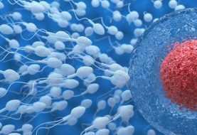 ¿Sabias qué una dieta saludable mejora la calidad del esperma?