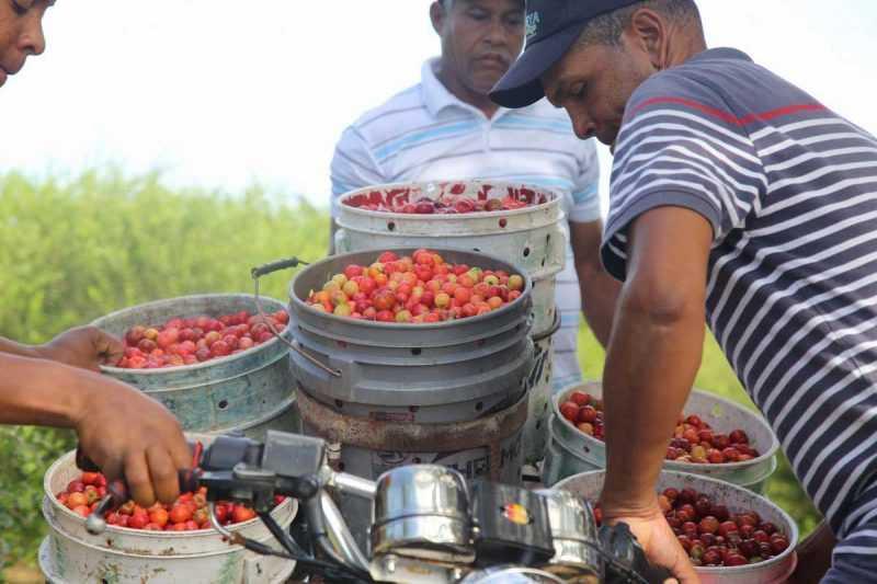Belloso | Gobierno aprueba financiamiento a productores de cerezas