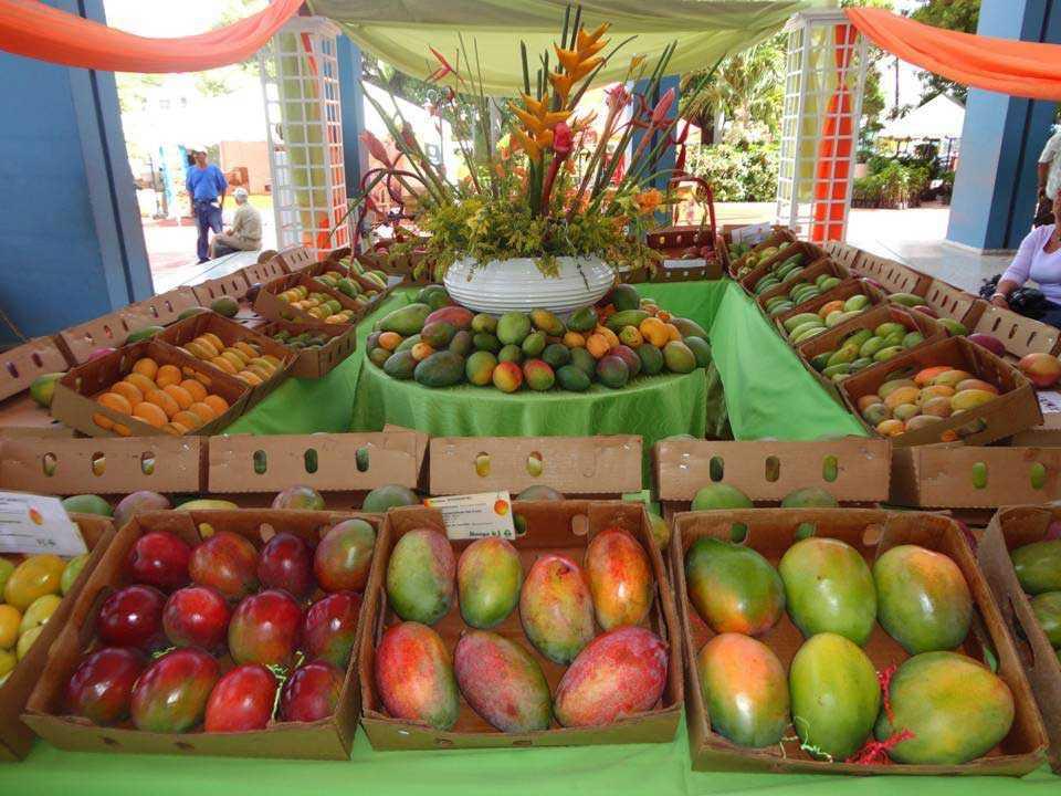 Exportaciones mangos de Baní alcanzan los US$6.9 millones