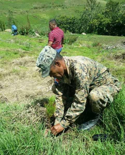 Medio Ambiente inicia reforestación de Valle Nuevo