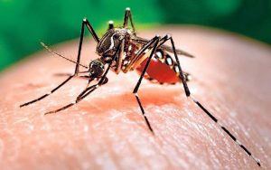 Cuba reporta aumento casos de Zika