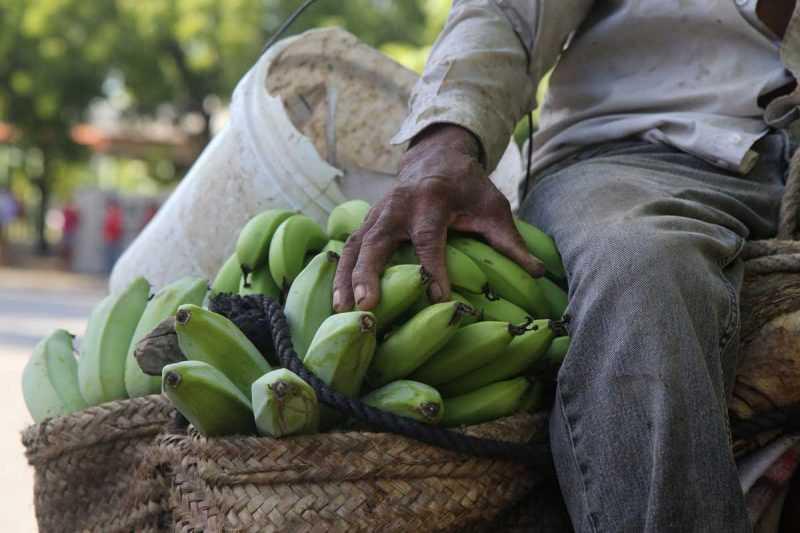 Fundación, Barahona, Gobierno apoya producción de plátanos y empacadora