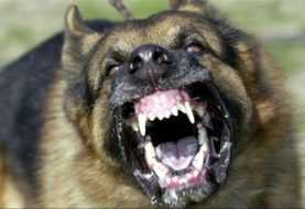 Niño en estado grave tras perro con rabia morderlo en el rostro