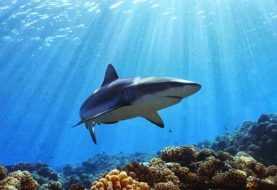 República Dominicana trabaja en la protección de tiburones y rayas
