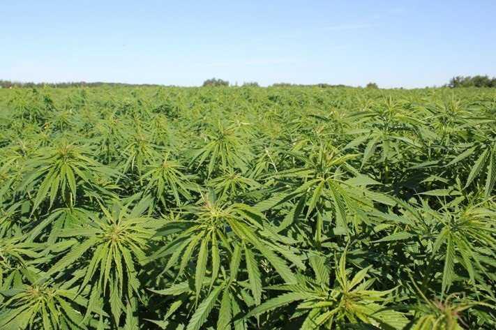 Apresan 8 personas por plantar marihuana en parque Nueva Jersey