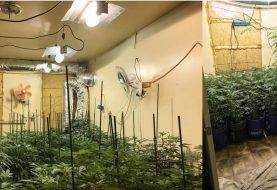 Bomberos fueron a apagar fuego  y encontraron cosecha de marihuana