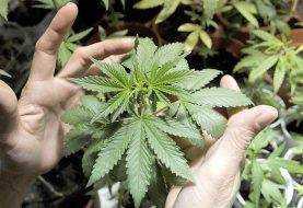 California inicia venta legal de marihuana