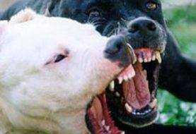 Niño es atacado por tres perros Pitbull en Puerto Plata