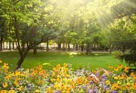 Cómo prevenir alergias para esta primavera