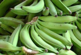 Comercio de plátanos genera más de RD$11 mil millones al año