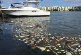 Florida: Por marea roja 7 condados en estado de emergencia