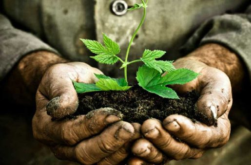 Alertan sobre impacto consumo recursos naturales del planeta