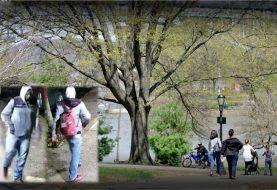 Dominicano acusado de agresión sexual parque Manhattan