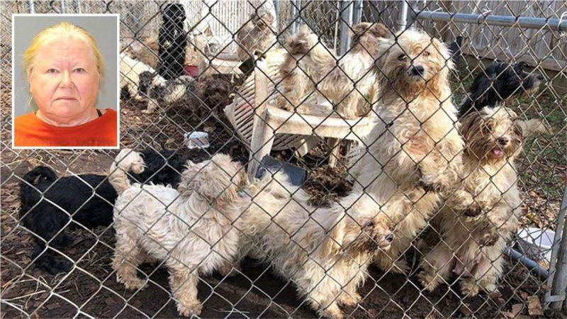 Mujer de Nueva Jersey tenía 161 perros vivos y 44 muertos