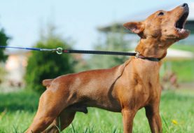 En Saddle River apresaran dueños de perros que ladran
