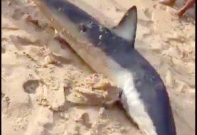Técnicos Medio Ambiente asisten en rescate tiburón en Sosúa