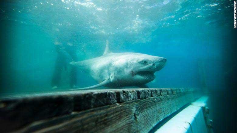 Tiburón merodea playas Long Island