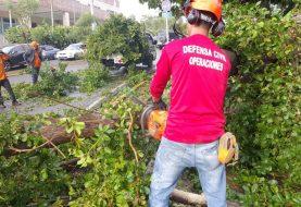 Lluvias y fuertes vientos derribaron árboles en Santiago