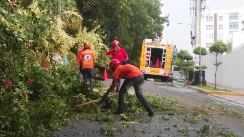 Ventarrón derribó varios árboles en Santiago