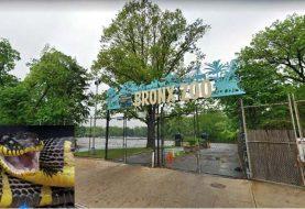 Serpiente venenosa escapa del zoológico de El Bronx