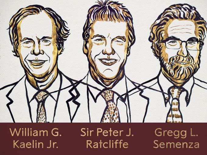 Dos estadounidenses y un británico gana Premio Nobel Medicina