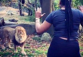 Persiguen mujer  zarandeó a león y jirafas en zoológico Bronx