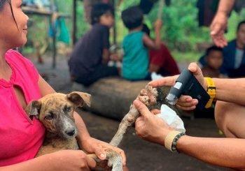 ¿Cuál es país que eliminó la rabia humana transmitida por perros?