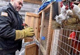 Decomisan 84 gallos de pelea en allanamientos a dominicanos en NJ