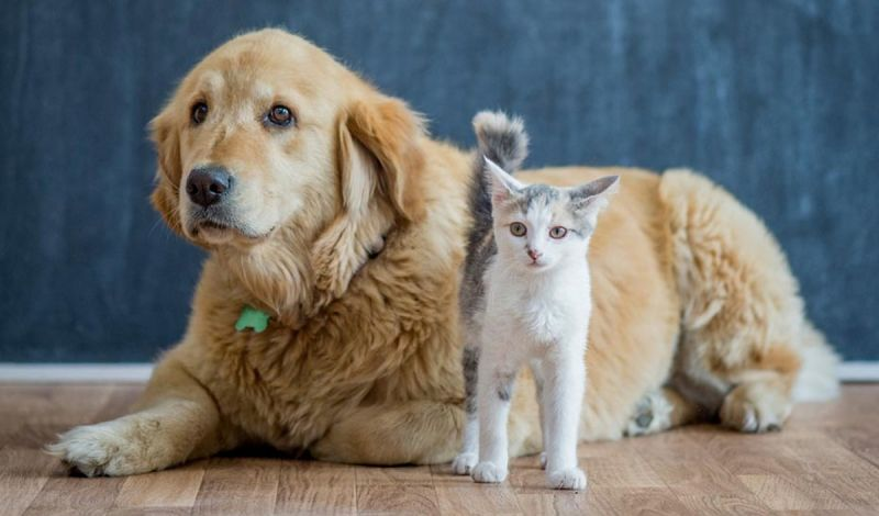Buscan prohibir venta de perros y gatos en tiendas de mascotas NY