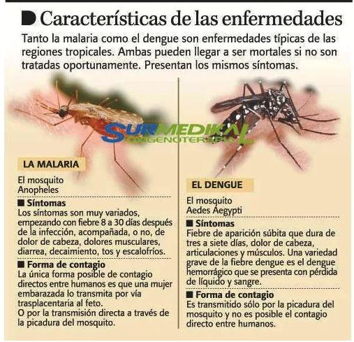 Dengue y malaria atacan en RD
