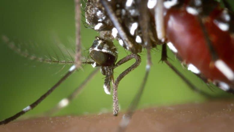 Virus del Nilo Occidental cobra tercera víctima en sur de España