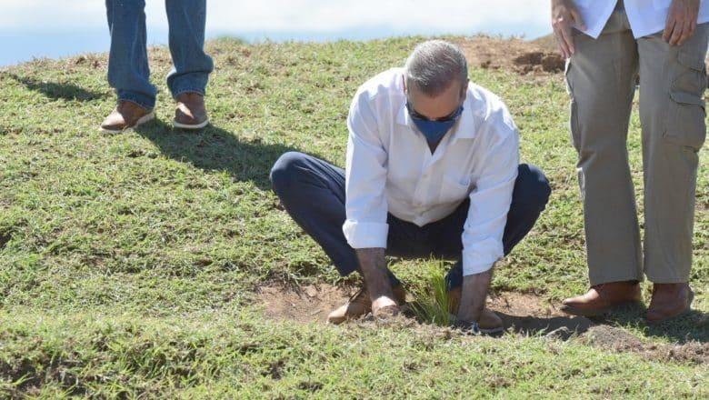 Abinader encabeza jornada de reforestación