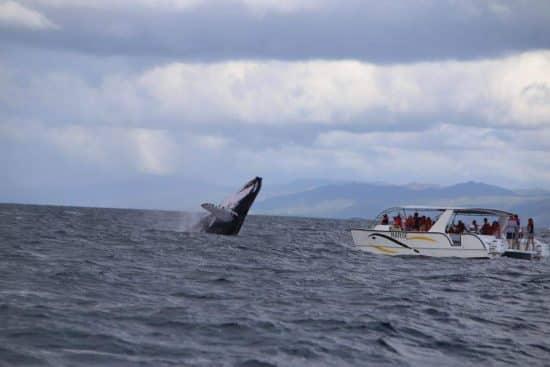 observación de ballenas