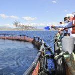 Tilapias criadas en jaulas flotantes