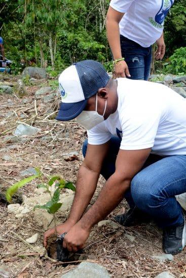 reforestacion duey