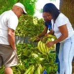Inespre vende plátanos a RD$1 peso