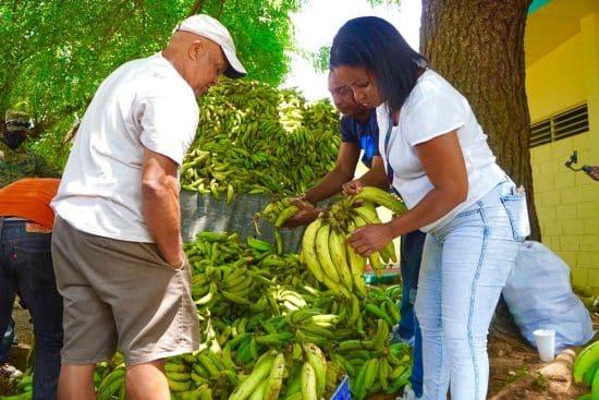 venta de plátanos