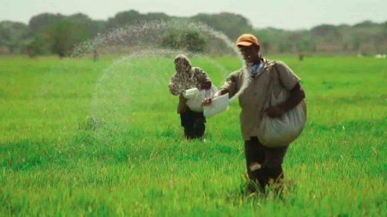 Más de 450 productores agropecuarios beneficiados Inespre